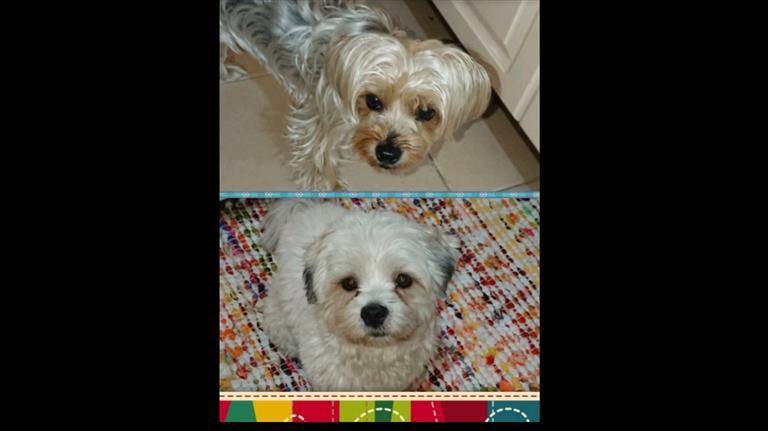 Atefeh Dog boarding, Pet Boarding, Dog Walking and Pet Sitting.
