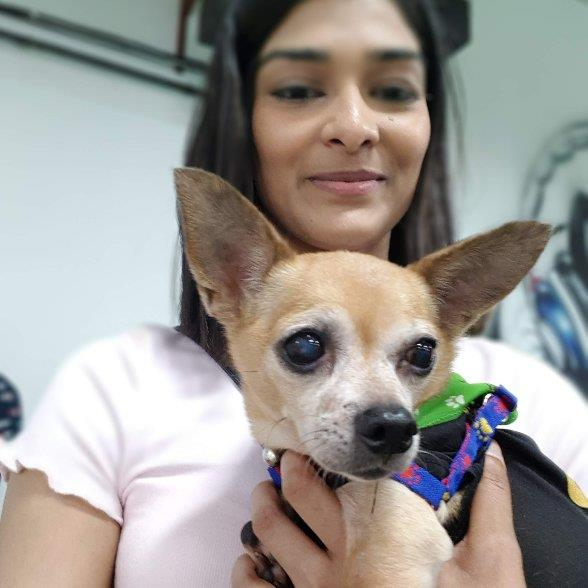 Tanvi  Pet hotel experience in real homes! 3
