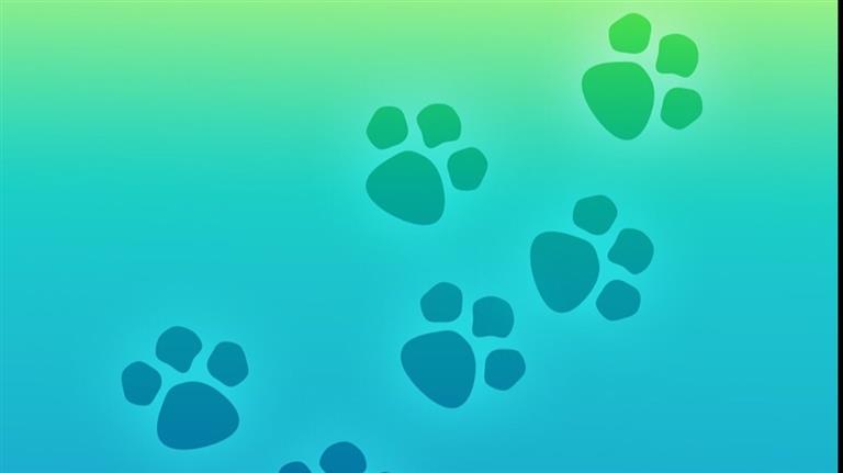 Alice Dog boarding, Pet Boarding, Dog Walking and Pet Sitting.