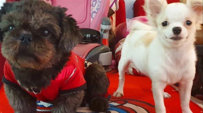 Pau Dog boarding, Pet Boarding, Dog Walking and Pet Sitting.