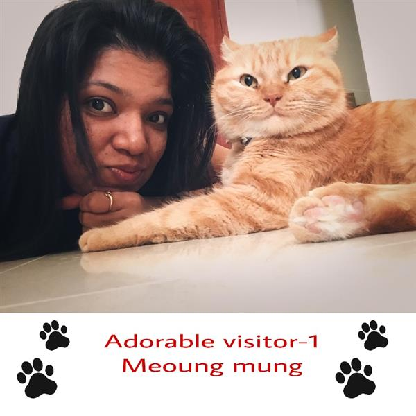 Shwetha Pet hotel experience in real homes! 3