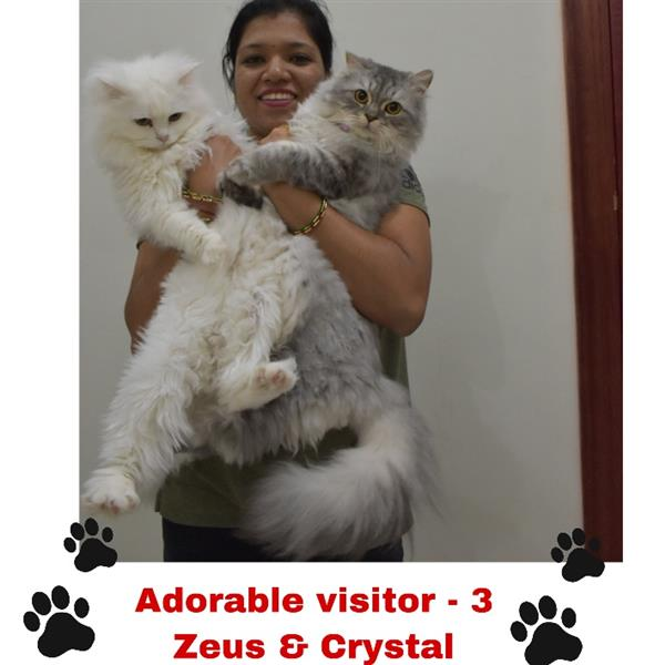 Shwetha Pet hotel experience in real homes! 4