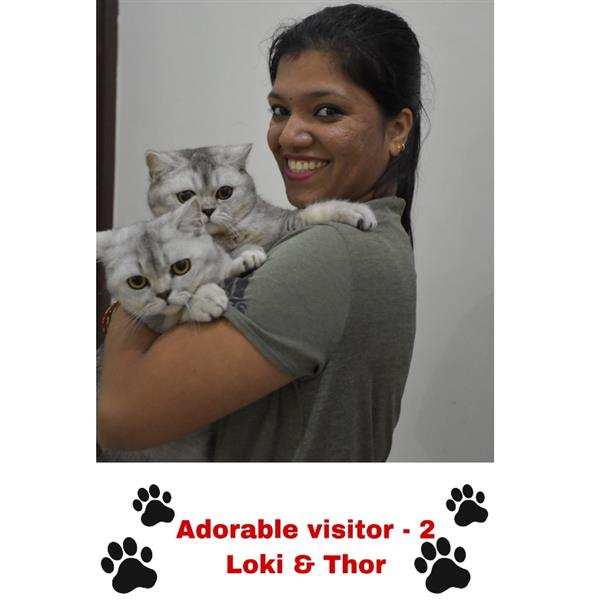 Shwetha Pet hotel experience in real homes! 5