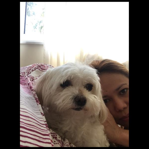 charmaine Pet hotel experience in real homes! 4