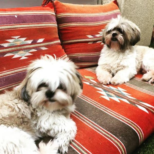 Karen Pet hotel experience in real homes! 5