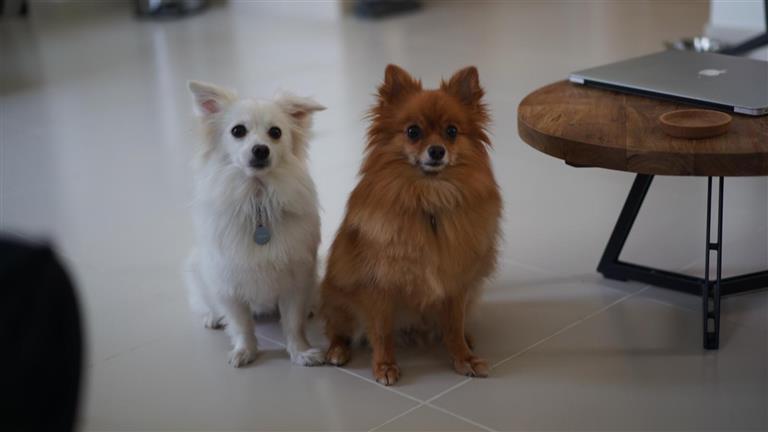Becki Dog boarding, Pet Boarding, Dog Walking and Pet Sitting.