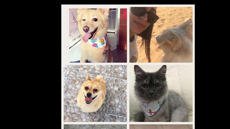 Suha Dog boarding, Pet Boarding, Dog Walking and Pet Sitting.