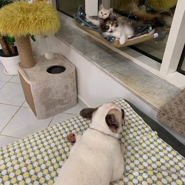 Priyanka Pet hotel experience in real homes! 21