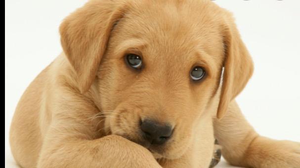 Jolie Dog boarding, Pet Boarding, Dog Walking and Pet Sitting.