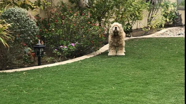 Ali Dog boarding, Pet Boarding, Dog Walking and Pet Sitting.