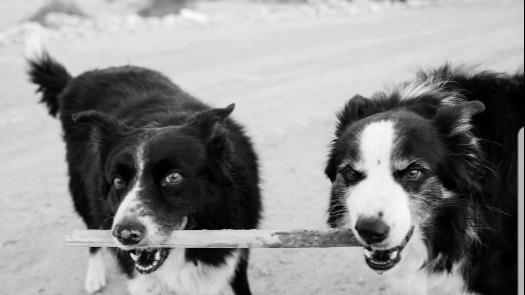 Lynn Dog boarding, Pet Boarding, Dog Walking and Pet Sitting.