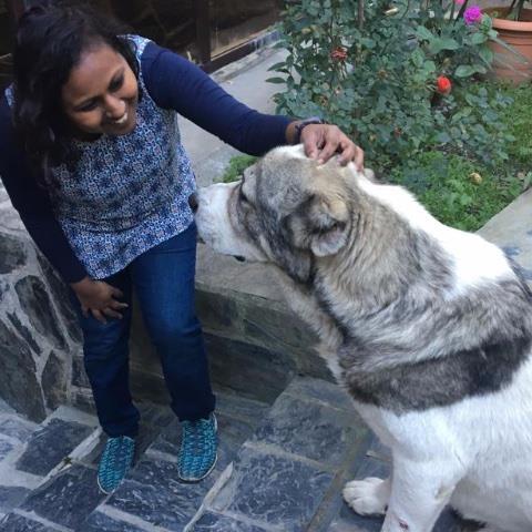 Bavani Pet hotel experience in real homes! 1