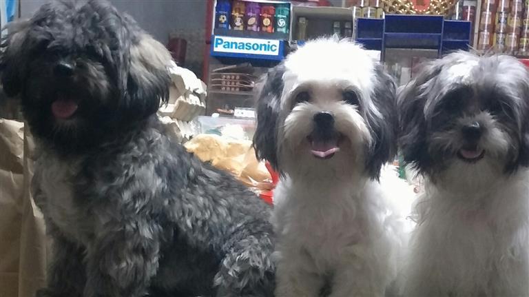 Sharra Mae Dog boarding, Pet Boarding, Dog Walking and Pet Sitting.