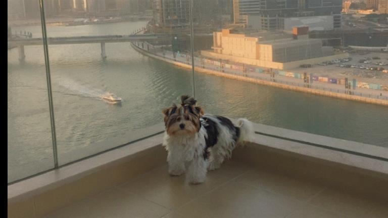 Mari Dog boarding, Pet Boarding, Dog Walking and Pet Sitting.