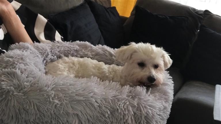 Lisa Dog boarding, Pet Boarding, Dog Walking and Pet Sitting.
