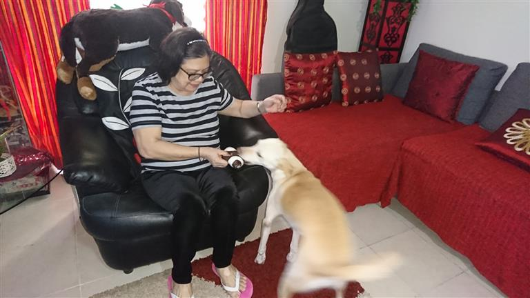 Yolanda  Dog boarding, Pet Boarding, Dog Walking and Pet Sitting.