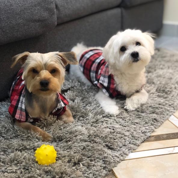 Irish Pet hotel experience in real homes! 2