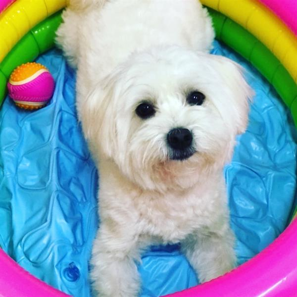 Irish Pet hotel experience in real homes! 6
