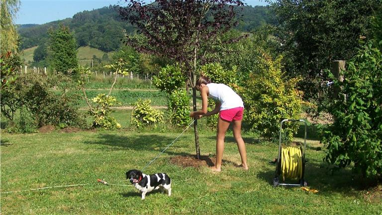 Aiala Dog boarding, Pet Boarding, Dog Walking and Pet Sitting.