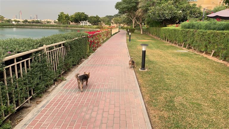 John Dog boarding, Pet Boarding, Dog Walking and Pet Sitting.