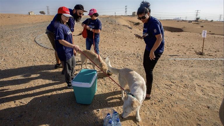 Sarah Dog boarding, Pet Boarding, Dog Walking and Pet Sitting.