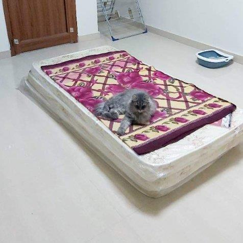 Yara Pet hotel experience in real homes! 12