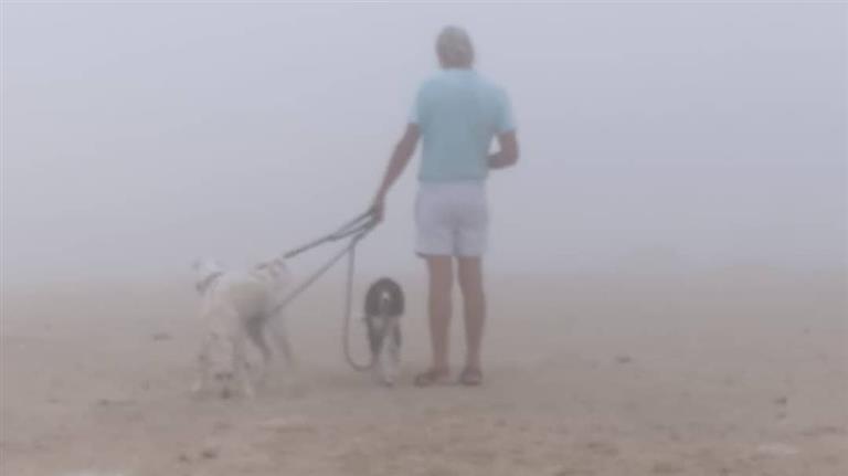 TANYA Dog boarding, Pet Boarding, Dog Walking and Pet Sitting.