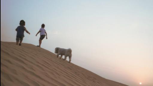 Dan Dog boarding, Pet Boarding, Dog Walking and Pet Sitting.