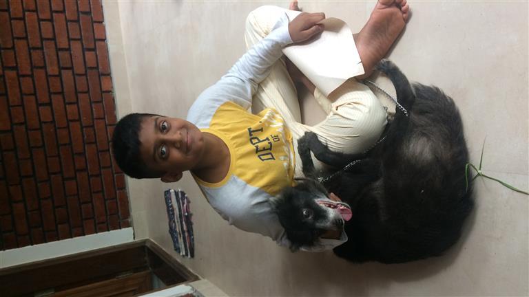 Shiney Dog boarding, Pet Boarding, Dog Walking and Pet Sitting.