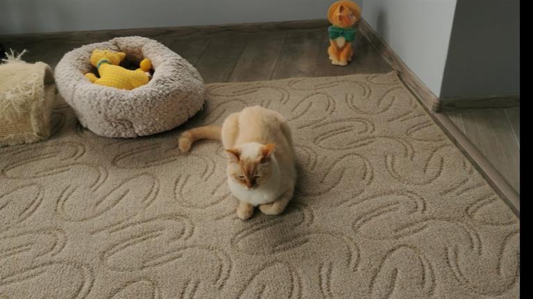 Vesela Dog boarding, Pet Boarding, Dog Walking and Pet Sitting.