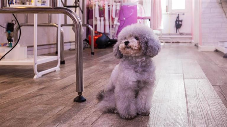 Regine Dog boarding, Pet Boarding, Dog Walking and Pet Sitting.