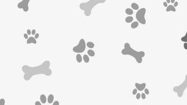 Kamila  Dog boarding, Pet Boarding, Dog Walking and Pet Sitting.