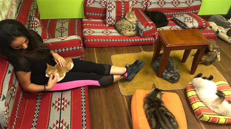 Goldie  Dog boarding, Pet Boarding, Dog Walking and Pet Sitting.