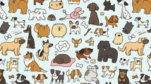 Therese May Dog boarding, Pet Boarding, Dog Walking and Pet Sitting.