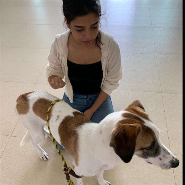 Riddhima Pet hotel experience in real homes! 2