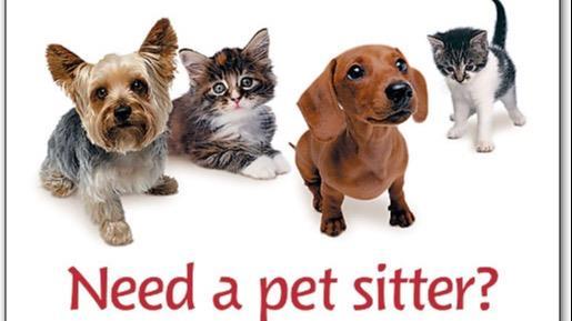 هيا  Dog boarding, Pet Boarding, Dog Walking and Pet Sitting.