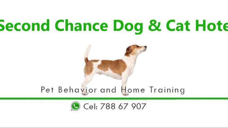 Charlie Dog boarding, Pet Boarding, Dog Walking and Pet Sitting.