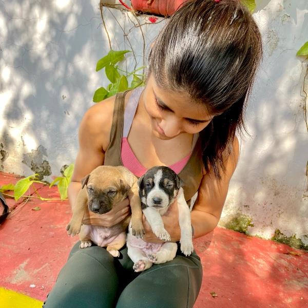 Aarohi Pet hotel experience in real homes! 3