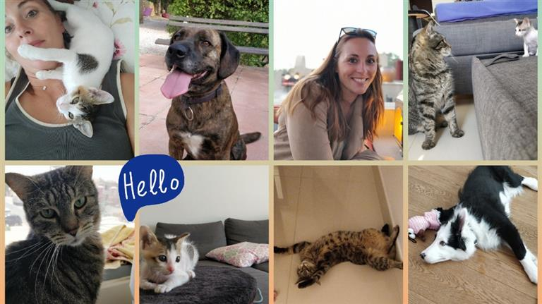 Delphine Dog boarding, Pet Boarding, Dog Walking and Pet Sitting.