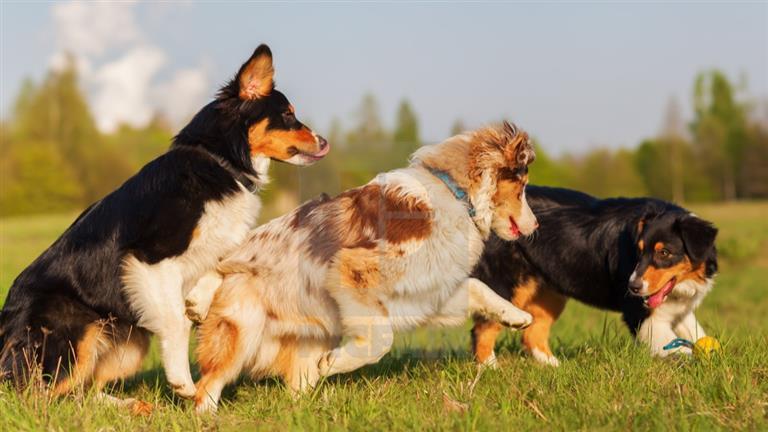 Mona Dog boarding, Pet Boarding, Dog Walking and Pet Sitting.