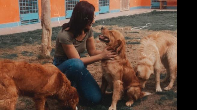 Rana Dog boarding, Pet Boarding, Dog Walking and Pet Sitting.