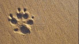 Constanze Dog boarding, Pet Boarding, Dog Walking and Pet Sitting.