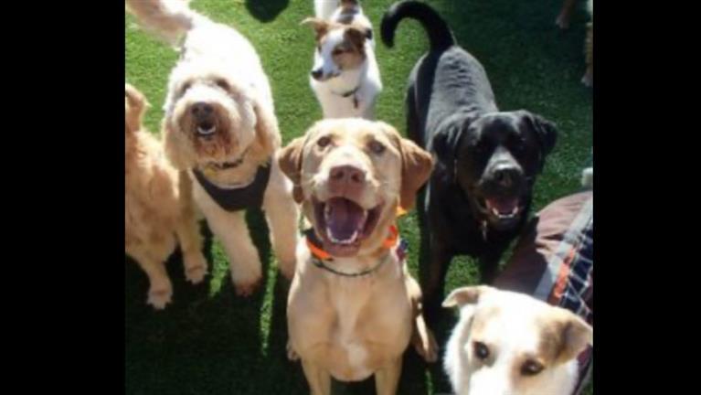 Judie Ann Dog boarding, Pet Boarding, Dog Walking and Pet Sitting.