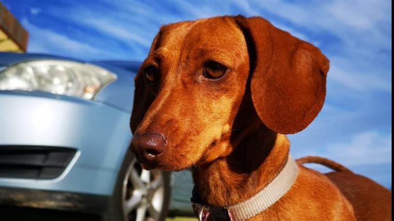 Megan Dog boarding, Pet Boarding, Dog Walking and Pet Sitting.