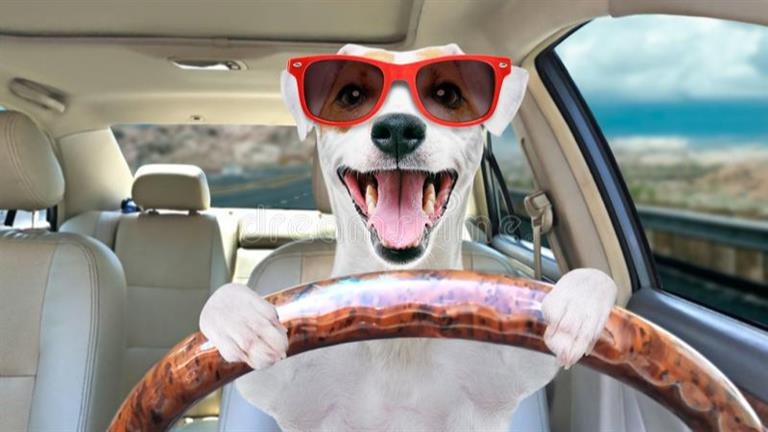 Olga Dog boarding, Pet Boarding, Dog Walking and Pet Sitting.