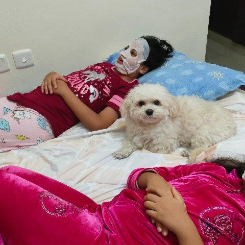 Sarika  Pet hotel experience in real homes! 1