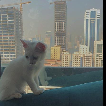 Fathima Pet hotel experience in real homes! 1
