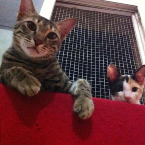 Krishan Pet hotel experience in real homes! 4