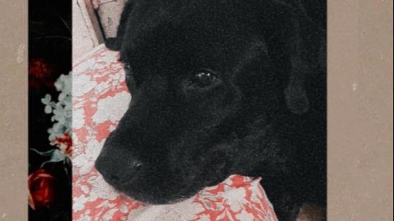 Aishwarya  Dog boarding, Pet Boarding, Dog Walking and Pet Sitting.