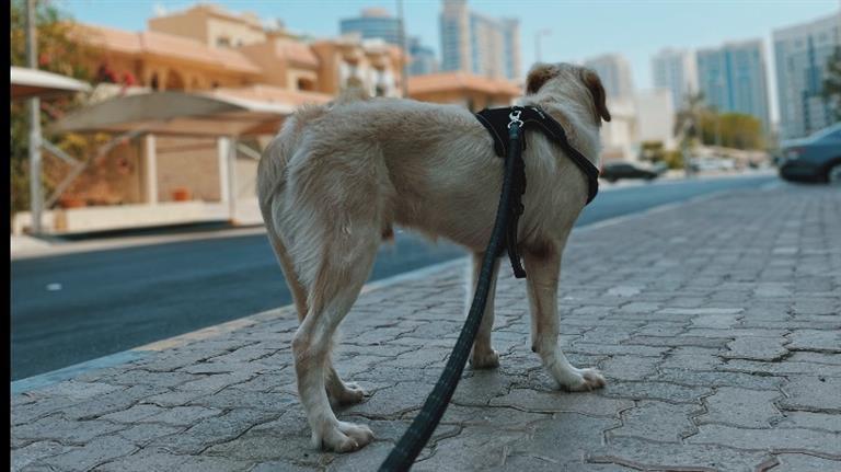 Jay Dog boarding, Pet Boarding, Dog Walking and Pet Sitting.